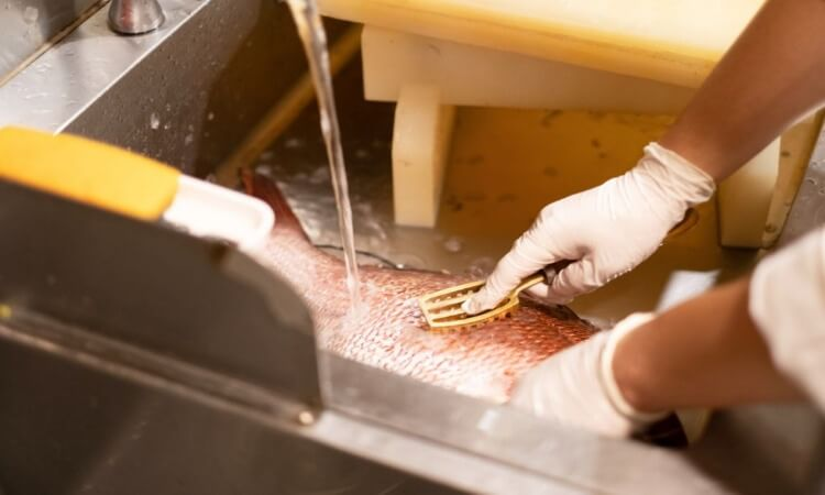 The 7 Best Fish Scale Removers For Preparing Fish